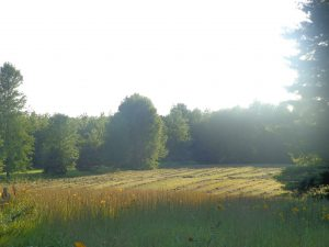 Beginning Fields