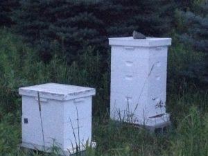 Bee Joy